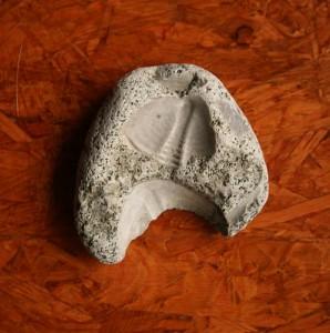 Geoloogia